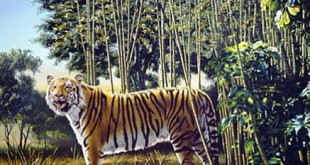 Can You See The Hidden Tiger ?