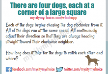 There are four dogs, each at a corner of a large square.