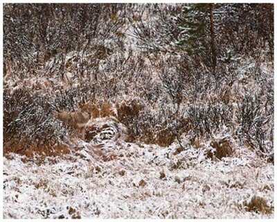 Find the hidden animal in this picture