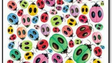 Can you find the ladybug without a match?