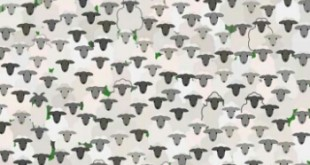 Find the Goat puzzle answer