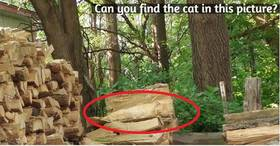 answer Can you find the cat in this picture?