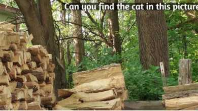 Can you find the cat in this picture?