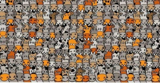 How quickly can you find the dog?