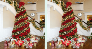 How many differences can you find? image puzzle answer