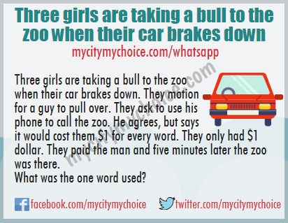 Three girls are taking a bull to the zoo when their car brakes down