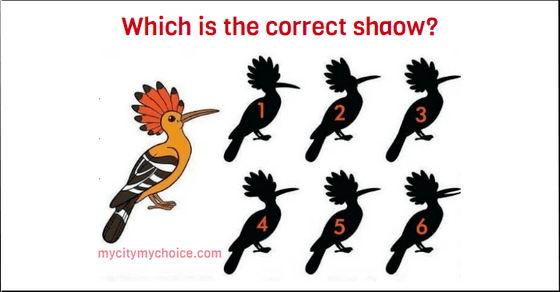 Which is the correct shadow answer
